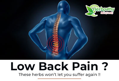 Low Back Pain  Underlying Cause and Treatment