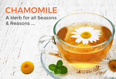 Chamomile Herb For All Seasons and Reasons