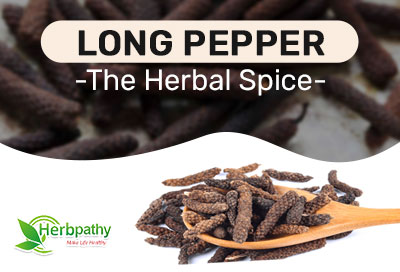 Long Pepper A Nutritive Herb